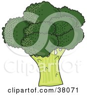 Clipart Illustration Of A Head Of Organic Green Broccoli by Maria Bell