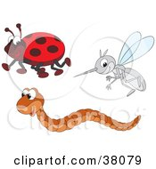 Clipart Illustration Of A Ladybug Worm And Mosquito