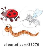 Ladybug Worm And Mosquito