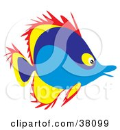 Clipart Illustration Of A Spiked Red Yellow And Blue Saltwater Fish