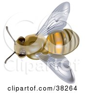 Clipart Illustration Of An Aerial View Of A European Honey Bee Or Western Honey Bee Apis Mellifera