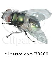 Clipart Illustration Of A Calliphoridae Fly by dero
