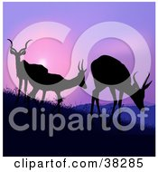 Clipart Illustration Of Three Silhouetted Antelope Grazing On A Hillside Against A Purple Sunset
