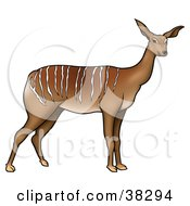 Clipart Illustration Of A Wild Antelope With White Stripes Along Its Back