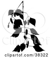 Clipart Illustration Of A Black Silhouetted Branch Of A Birch Tree