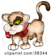 Clipart Illustration Of A Brown Cat With A Hairy Chest Wearing A Red Bow by dero