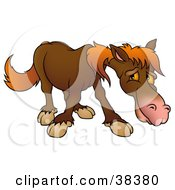 Clipart Illustration Of A Shy Brown Horse With Orange Hair