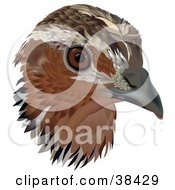 Clipart Illustration Of A Common Quail Coturnix Coturnix Bird Head by dero