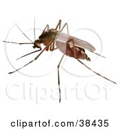 Clipart Illustration Of A Culex Sp Mosquito