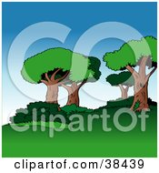 Clipart Illustration Of A Nature Background Of Mature Trees And Bushes Over Lawn On A Hill