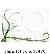 Clipart Illustration Of A Thick Green Vine Growing Along The Left And Bottom Edges Of A White Background by dero