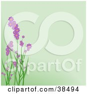 Purple Spring Flowers On Green Stalks Over A Pale Green Background