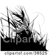 Clipart Illustration Of Black Silhouetted Grasses by dero