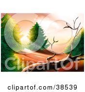 Clipart Illustration Of Morning Sunlight Shining Between Forest Trees Onto A Dead Tree by dero