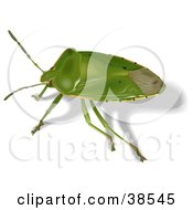 Clipart Illustration Of A Green Stink Bug Acrosternum Hilare by dero