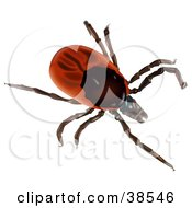 Clipart Illustration Of A Red Sheep Tick Or Castor Bean Tick Ixodes Ricinus