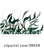 Clipart Illustration Of Long Leaved Green Grasses by dero
