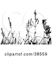 Clipart Illustration Of Black Silhouetted Weeds