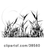 Clipart Illustration Of Black Silhouetted Grass Weeds by dero