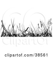 Clipart Illustration Of Tall Weeds Silhouetted In Black