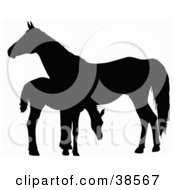 Clipart Illustration Of A Silhouette Of A Foal Grazing By A Horse by dero #COLLC38567-0053