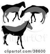Clipart Illustration Of Silhouetted Horses Walking And Grazing by dero