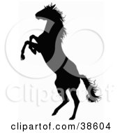 Clipart Illustration Of A Black Silhouette Of A Rearing Horse by dero #COLLC38604-0053