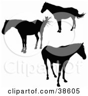 Clipart Illustration Of Three Standing Silhouetted Horses by dero