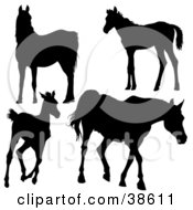 Clipart Illustration Of Silhouetted Horses Gazing Standing Running And Walking by dero