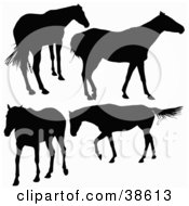 Clipart Illustration Of Four Silhouetted Horses Standing And Walking by dero