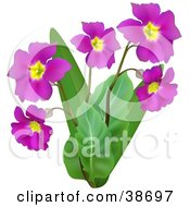 Clipart Illustration Of A Plant Growing Purple Flowers by dero