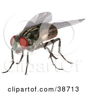 Clipart Illustration Of A Housefly Musca Domestica