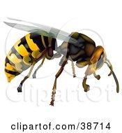 Clipart Illustration Of A Flying Common Wasp Vespula Vulgaris