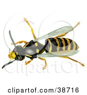 Clipart Illustration Of An Aerial View Of A Common Wasp Vespula Vulgaris