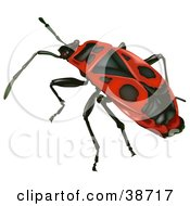 Clipart Illustration Of A Red Firebug Pyrrhocoris Apterus