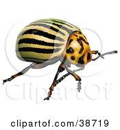 Clipart Illustration Of A Colorado Potato Beetle Colorado Beetle Ten Striped Spearman Or Ten Lined Potato Beetle Leptinotarsa Decemlineata by dero