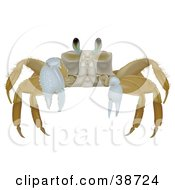 Clipart Illustration Of A Beige Malocostraca Crab by dero