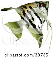 Clipart Illustration Of A Striped Angelfish Pterophyllum Scalare by dero
