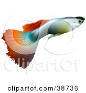 Clipart Illustration Of A Millionfish Or Guppy Poecilia Reticulata In Profile by dero