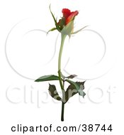 Clipart Illustration Of A Single Red Rose