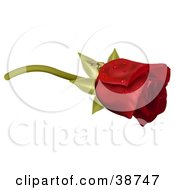 Clipart Illustration Of Dew Drops On A Single Red Rose