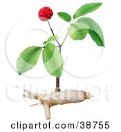 Clipart Illustration Of A Ginseng Plant