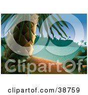Clipart Illustration Of A Palm Tree And Green Tropical Plants On A Dry Sandy Beach Of A Tropical Island by dero