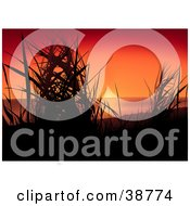 Clipart Illustration Of A Red And Orange Sunset Silhouetting Grasses by dero