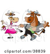 Clipart Illustration Of A Handsome Young Bull Dancing With A Lady Cow On A Dance Floor