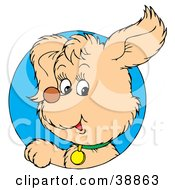 Clipart Illustration Of A Friendly Beige Puppy Dog Wearing A Green Collar Peeking Out Through A Blue Circle
