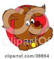 Friendly Brown Puppy Dog Wearing A Blue Collar Peeking Out Through A Red Circle