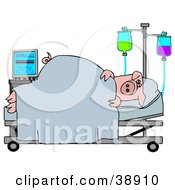 Clipart Illustration Of A Sick Pig Resting In A Hospital Bed