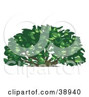 Clipart Illustration Of A Lush Green Shrub by Tonis Pan