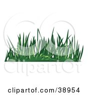 Tuft Of Green Lawn